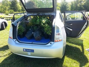 Kathy Arnold Car full of plants